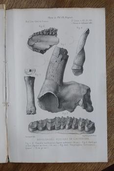 lingua terrae books paleontology mammalssäugetierfauna des pliocäns und postpliocäns von mexiko ii teil mastodonten und elefanten 1922 geologische und palaeontologische abhandlungen nf